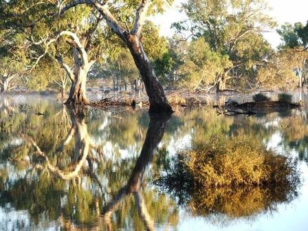 Dickie Swamp, north of Tungamah, Victoria