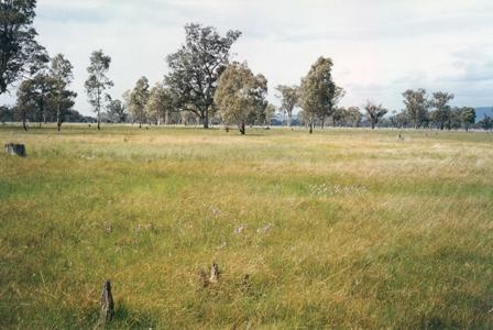 Balmattum Nature Conservation Reserve. Photo: Doug Robinson